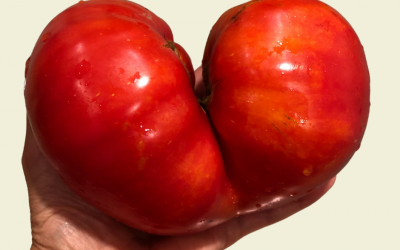 Tomatoes – A Staple In Every Cuisine